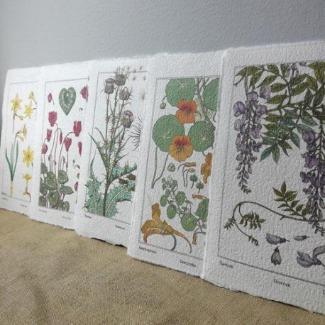 Cartes botaniques vintage - Les 5 modèles