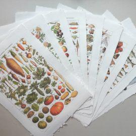 Affiche poster vintage planche éducative nature botanique plantes