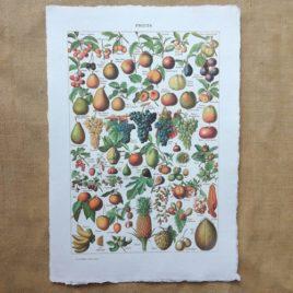 Poster affiche vintage sur papier fait main. Planche illustrée éducative sur les fruits
