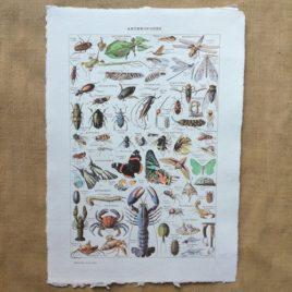 Poster affiche vintage sur papier fait main. Planche illustrée éducative sur les arthropodes et insectes