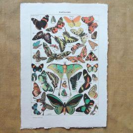 Poster affiche vintage sur papier fait main. Planche illustrée éducative sur les papillons