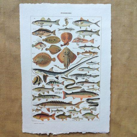 Poster affiche vintage sur papier fait main. Planche illustrée éducative sur les poissons et la pêche