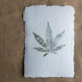 Carte papier avec feuille de chanvre